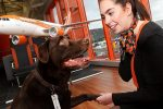 easyJet passengers can now book a pet sitter along with their flight