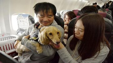 Owners, dogs travel together on special Japan Airlines tour